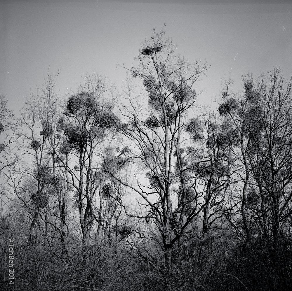 hid-place-41600.jpg